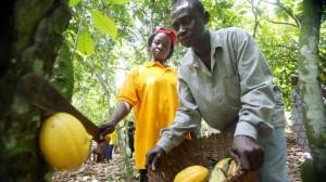ghana-cocoa-farmer