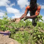 Climate-proofing Africa's agriculture offers opportunities